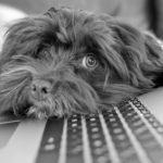 COVID-19 : les outils pour le télétravail et outils collaboratifs